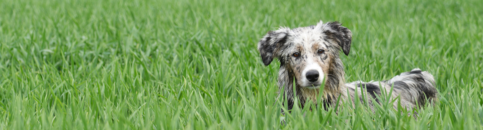 dog long grass